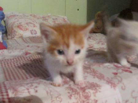 je donne 5 chatons
