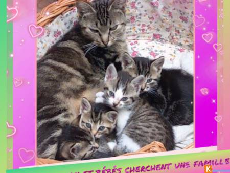 Maman et ses chatons