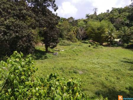 Guadeloupe Abymes Chauffours - terrain