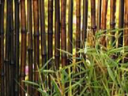 Canisse Bambou occultant 2 lots naturel 1 x3