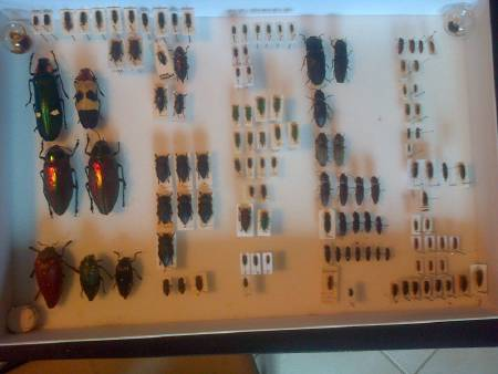 collection d'insectes