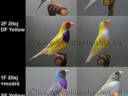 Diamants de gould