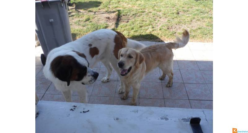 Garde de chiens en pension familiale